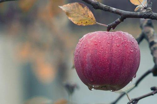 Fruits et légumes de saison : Octobre <em>(de Maryse Travo)</em>